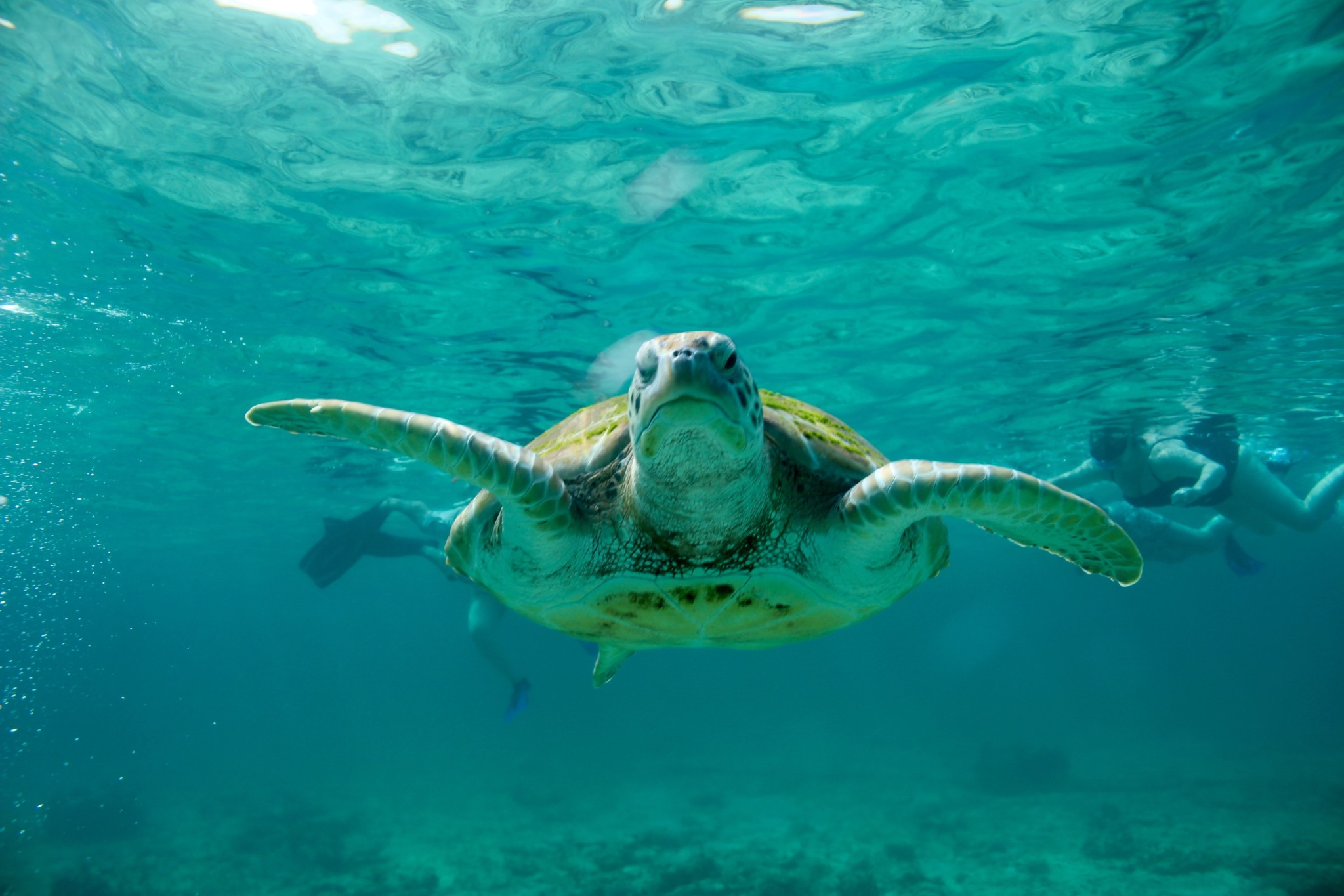 Swim with Sea Turtles - Playa Del Carmen